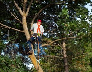 tree trimming cedar park tx