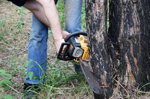 Tree removal certified arbor care we dont recommend attempting tree removal as a do it yourself project hiring a professional tree removal service like certified arbor care to do the work solutioingenieria Gallery
